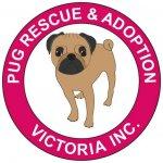 Pug Rescue and Adoption Victoria